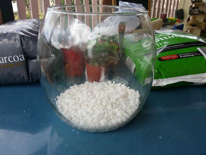 terrarium pebbles