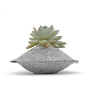 grey pod