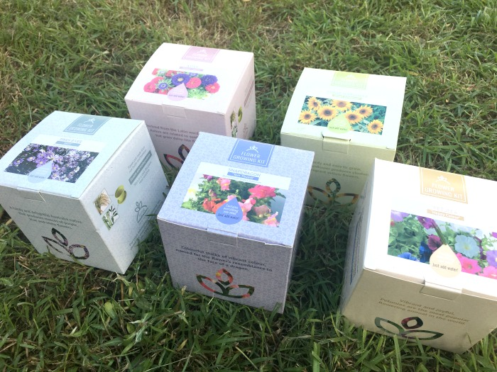 Living Fundraisers Flower Growing Kit