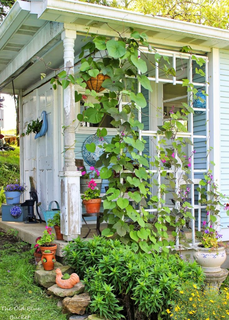 She Shed with climbing vine - The Old Blue Bucket